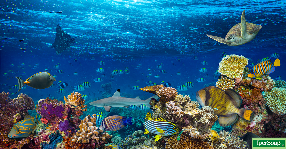 Animali marini, cinque tra i più noti e le loro particolarità